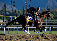 Royal Delta, trained by Bill Mott, trains for the Breeders' Cup Distaff at Santa Anita Park in Arcadia, California on October 30, 2013.