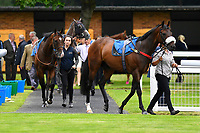 Horses enter the parade ring for the first race during the Bathwick Tyres & EBF Race Day at Salisbury Racecourse on 6th September 2018