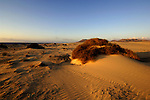 Sand dunes early morning at Corralejo, Fuerteventura, Canary Islands, Spain