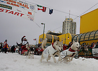 Karen Ramstead's team of Siberian Huskies charges down the start chute in Anchorage on Saturday March 1st during the ceremonial start day of the 2008 Iidtarod Sled Dog Race.