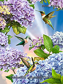 Dona Gelsinger, FLOWERS, BLUMEN, FLORES,humming birds, paintings+++++,USGE1824A,#f#, EVERYDAY