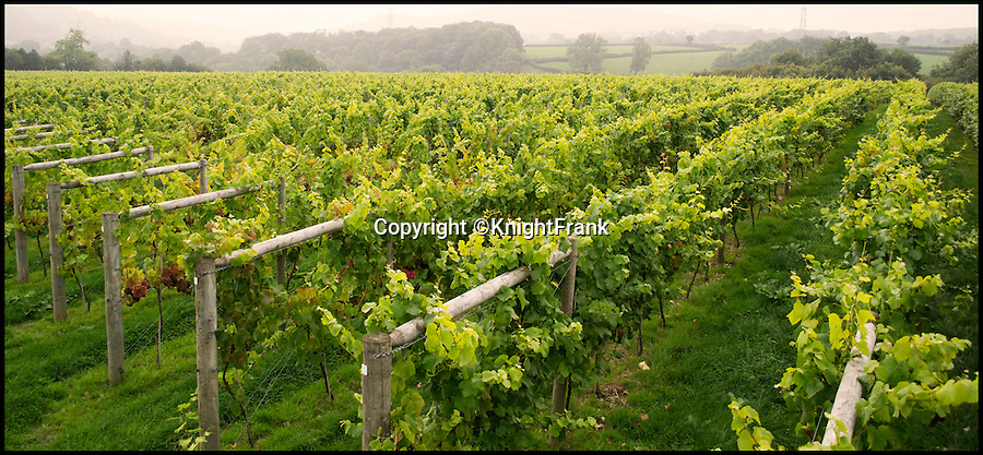 BNPS.co.uk (01202 558833)<br /> Pic: KnightFrank/BNPS<br /> <br /> The 23 acre vineyard.<br /> <br /> Wine lovers will want to snap up this beautiful property which comes with its own ready-made business - an award-winning vineyard.<br /> <br /> Southcote Farm, near Honiton in Devon, has an attractive farmhouse and a mixture of farmland as well as about 23 acres of vines in an area of outstanding natural beauty near the coast.<br /> <br /> Owners Nigel and Dawn Howard transformed the former stud farm to create the vineyeard from scratch, planting their first vines in 2010.<br /> <br /> The Southcote Vineyard plantings are 11,000 Bacchus, 6,000 Pinot Noir and 6,000 Seyval Blanc over 20 acres and the Watchcombe Vineyard is about three acres with 1,000 Pinot Noir and 2,000 Seyval Blanc.<br /> <br /> The 54-acre farm is on the market with Knight Frank for &pound;1.95million.
