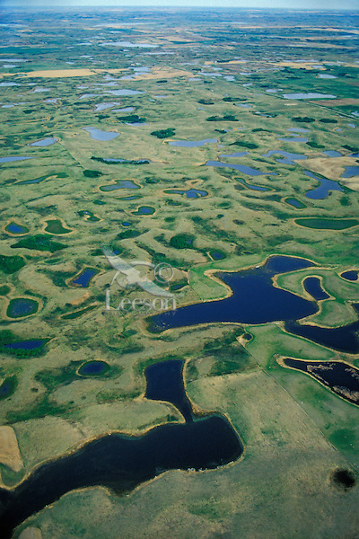 Prairie potholes, Lostwood NWR area of North Dakota.  May.