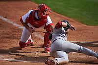 Surprise Saguaros catcher Mike Ohlman (84) tags Oscar Hernandez (25), who was called safe, sliding into home during an Arizona Fall League game against the Salt River Rafters on October 20, 2015 at Salt River Fields at Talking Stick in Scottsdale, Arizona.  Surprise defeated Salt River 3-1.  (Mike Janes/Four Seam Images)