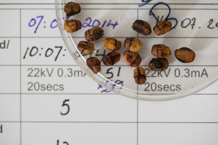 Seeds from around the world under go xray analysis to check their viability before storage in the millenium seedbank. Wakehurst Place - Royal Botanic Gardens, Kew. Ardingly, West Sussex, UK.