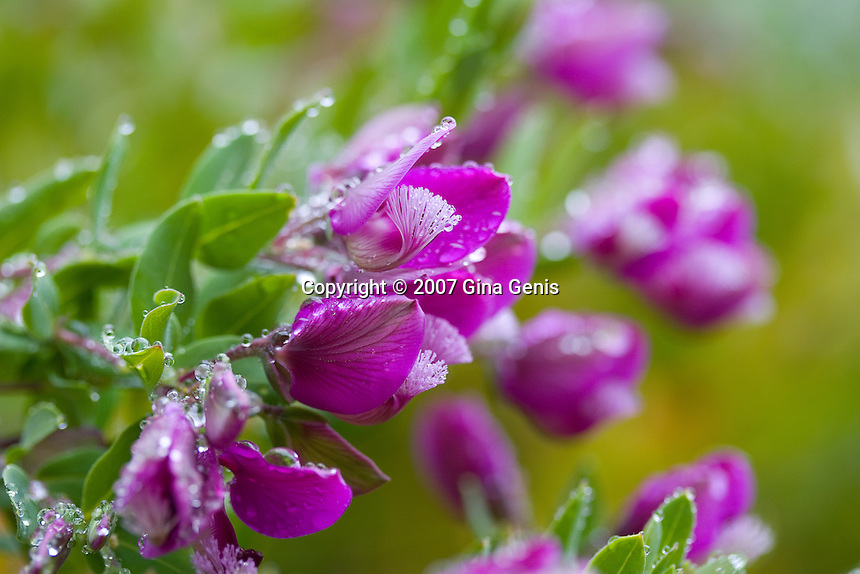 Purple flowers on a misty day