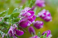 Purple flowers on a misty day