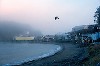 A bird takes flight over the waterfront of Angoon, Alaska. The Tlingit village of Angoon was leveled by the U.S. Navy in 1882 after an alleged cultural misunderstanding.
