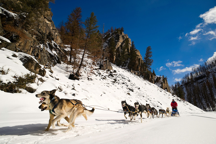 A sled dog team cruises through fresh powder in the Absaroka Mountains east of Emigrant, Montana.