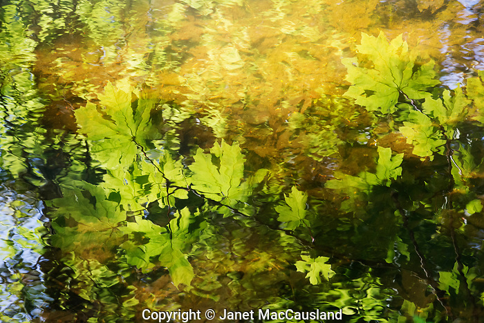 A soft, impressionistic reflection of the woodland canopy caught my eye in the slowly moving stream. The repetitive shapes and colors lend unity to what is often chaotic in the natural world. The right shutter speed allows details to emerge and lend stability to the image capture.