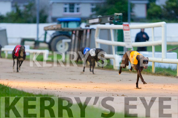 Curious Boy winner of the Kerry Group Hospital Sweepstake Final at the Kingdom Greyhound Stadium on Friday