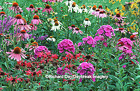63821-09016 Red Bee Balm, Pink Garden Phlox, Purple & White Coneflowers, Gray-headed Coneflowers, Morden Pink Lythrum IL
