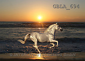 Bob, ANIMALS, collage, horses, photos(GBLA694,#A#) Pferde, caballos