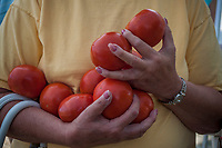 Woman holds two hands full of fresh tomatoes for sale at a local farmers market.