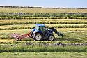 Cut hay being processed, Peak District National Park, Derbyshire, UK. June.