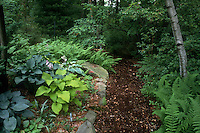 Shade garden path: mulched wood, perennials foliage plants hostas mixture, pulmonaria, ferns, birch tree Betula, shady plants combination view scene