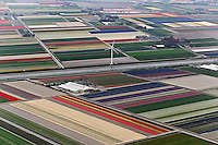 Aerial view of tulip and hyacinth flower fields and wind turbines surrounding Amsterdam, Netherlands