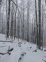 FOREST_LOCATION_90173