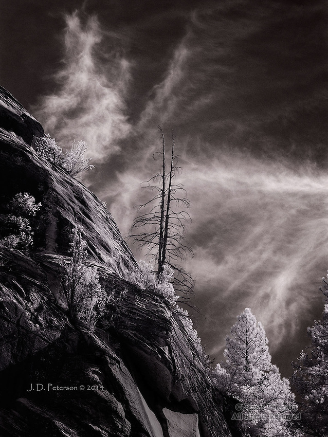 Skeletal Pines, West Fork of Oak Creek (Infrared)