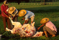 Cowherds slaughtering cattle, Pantanal Matogrossense, Brazil.