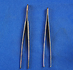 A comparison of non-toothed and toothed tissue forceps. The toothed variety provide a firmer hold on tissue, but increase the risk of damaging the tissue. They are therefore primarily used on skin as opposed to more delicate, internal tissue. Royalty Free
