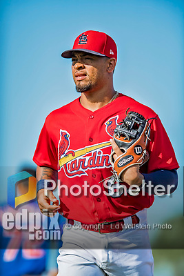 28 February 2019: St. Louis Cardinals top prospect infielder Edmundo Sosa returns to the dugout during a Spring Training game against the New York Mets at Roger Dean Stadium in Jupiter, Florida. The Mets defeated the Cardinals 3-2 in Grapefruit League play. Mandatory Credit: Ed Wolfstein Photo *** RAW (NEF) Image File Available ***