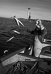 Joey Jeffery, handline fisherman, hauling in mackerel, working out of Newlyn, Cornwall, England.<br /> <br /> For most of the winter and spring months Joey will fish for mackerel along the coast from Newlyn and as the fish move 'around the corner' to St. Ives during the summer months, the fishermen will follow them. <br /> <br /> Handlining for mackerel is one of the most eco-friendly and sustainable forms of fishing and is usually done in the morning and evening. Joey will leave the harbour as early as 3.30 a.m. in order to reach the fishing grounds by dawn. <br /> <br /> After a few hours, the boat is packed full of fish and the hour long journey back to Newlyn is made so that the catch can be unloaded, graded, weighed and packed with ice into the market's freezer, ready for the following morning's auction.<br /> <br /> Normally he would make a second trip later on in the day, but fishing has been good this morning and he senses that the shoals are still there and so heads straight back out. <br /> <br /> Joey has had various jobs within the fishing industry in Newlyn and now, as a highly experienced handline fisherman, he will be fishing for the much prized Bass later on in the year.