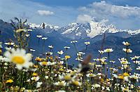 Europe/Italie/Val d'Aoste:Paturages et Mont-Blanc  depuis Le Pila