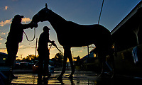 LOUISVILLE, KENTUCKY - MAY 02: A horse gets a bath on the backside during Kentucky Derby and Oaks preparations at Churchill Downs on May 2, 2017 in Louisville, Kentucky. (Photo by Scott Serio/Eclipse Sportswire/Getty Images)