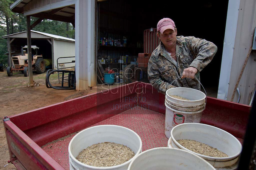 John Stuedemann's helper loads feed for cattle in Comer, Ga. on Monday, Sept. 25, 2006. Stuedemann says he applies techniques with his cattle that he has learned since childhood in Iowa, such as positive reinforcement, minimal occurrences of pain or fear, and calm motions and speech.