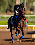 OCT 21: Mckinzie prepares for the Breeders' Cup Classic at Santa Anita Park in Arcadia, California on Oct 21, 2019. Evers/Eclipse Sportswire/CSM