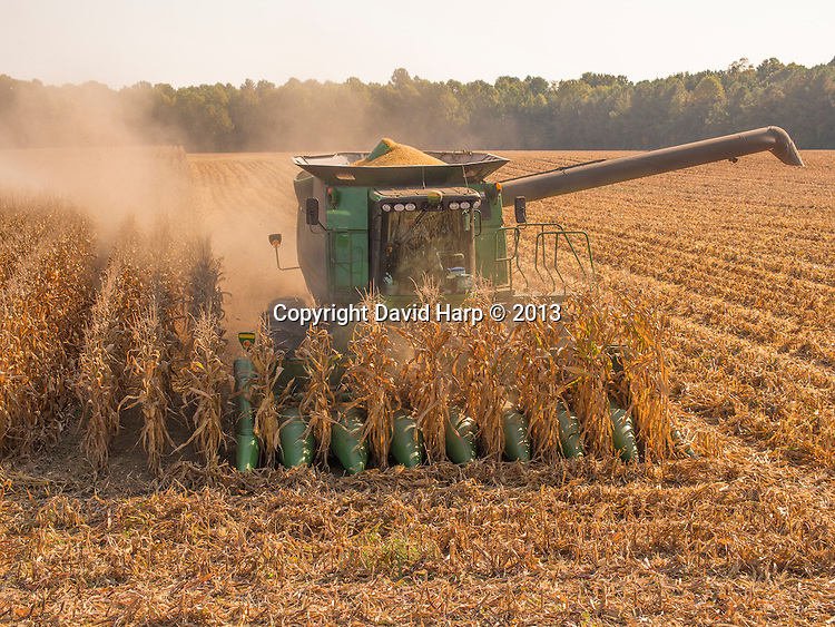 David Hutchinson harvests corn on the family farm