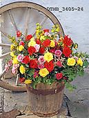 Gerhard, FLOWERS, BLUMEN, FLORES, photos+++++,DTMB3405-24,#F#