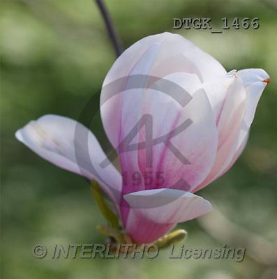 Gisela, FLOWERS, photos(DTGK1466,#F#) Blumen, flores, retrato