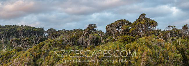 Coastal forest and clouds at Ship Creek during sunset,  UNESCO World Heritage Area, South Westland, West Coast, New Zealand, NZ