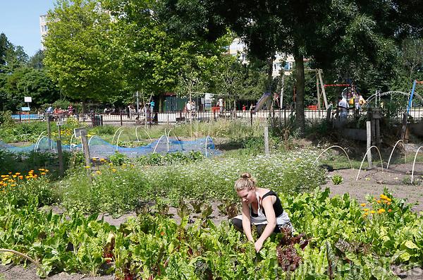 Nederland  Utrecht  2017.  De Voedseltuin Overvecht is een gemeenschappelijke tuin waar we biologische groente, kruiden, fruit en bloemen met en voor Overvechters verbouwen. Iedereen die meehelpt, deelt mee in de oogst.   Foto Berlinda van Dam / Hollandse Hoogte