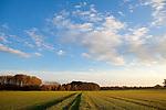 Europa, DEU, Deutschland, Nordrhein Westfalen, NRW, Rheinland, Niederrhein, Wachtendonk, Agrarlandschaft, Acker, Feld, Himmel, Wolken, Kategorien und Themen, Natur, Umwelt, Landschaft, Jahreszeiten, Stimmungen, Landschaftsfotografie, Landschaften, Landschaftsphoto, Landschaftsphotographie, Wetter, Himmel, Wolken, Wolkenkunde, Wetterbeobachtung, Wetterelemente, Wetterlage, Wetterkunde, Witterung, Witterungsbedingungen, Wettererscheinungen, Meteorologie, Bauernregeln, Wettervorhersage, Wolkenfotografie, Wetterphaenomene, Wolkenklassifikation, Wolkenbilder, Wolkenfoto....[Fuer die Nutzung gelten die jeweils gueltigen Allgemeinen Liefer-und Geschaeftsbedingungen. Nutzung nur gegen Verwendungsmeldung und Nachweis. Download der AGB unter http://www.image-box.com oder werden auf Anfrage zugesendet. Freigabe ist vorher erforderlich. Jede Nutzung des Fotos ist honorarpflichtig gemaess derzeit gueltiger MFM Liste - Kontakt, Uwe Schmid-Fotografie, Duisburg, Tel. (+49).2065.677997, ..archiv@image-box.com, www.image-box.com]