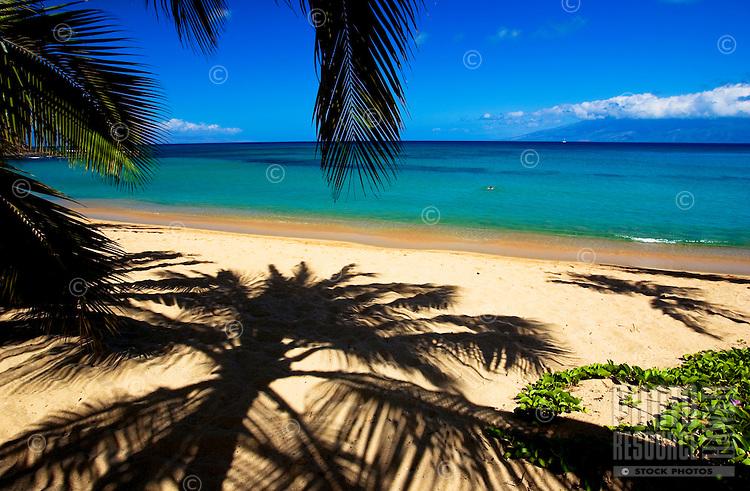 Palm shadows frame the beach at Napili Bay, Maui.