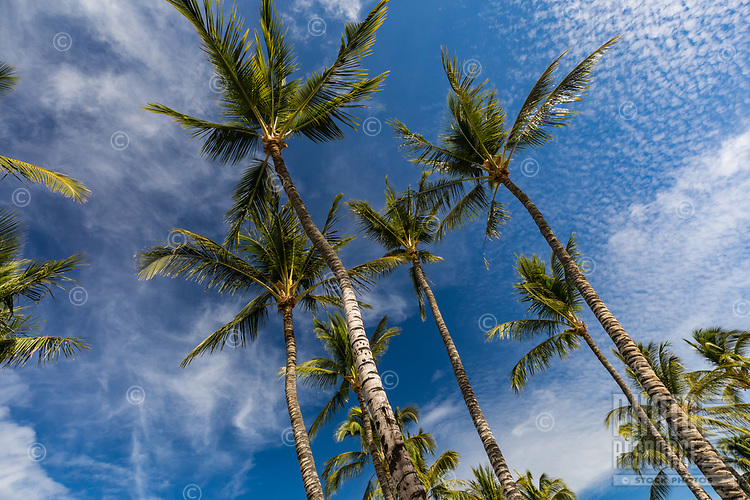 The view from a hammock on an idyllic day on the Big Island of Hawai'i.