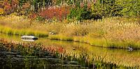 Subalpine Lake and Forest, Washington