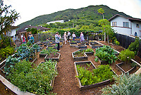 Family and friends enjoying a party in an organic garden in Kalihi