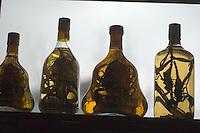 Snake and scorpion wine.