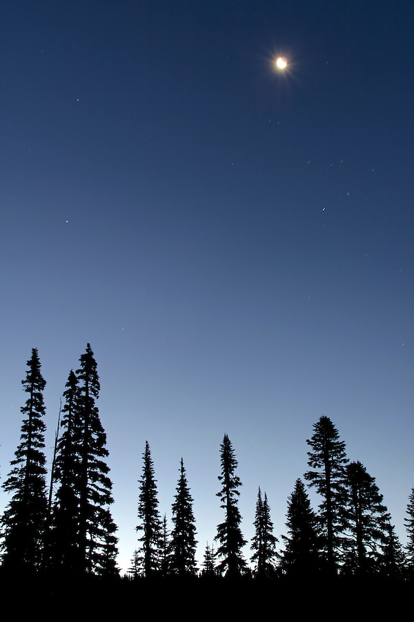 Moon and stars in deep blue sky above silhouetted subalpine fir, Mount Rainier National Park, Lewis County, Cascade Mountains, Washington, USA