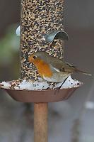 Rotkehlchen, an der Vogelfütterung, Fütterung im Winter bei Schnee, mit Körnern gefüllten Futtersilo, Winterfütterung, Erithacus rubecula, robin