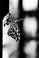 Metamorphsis, 35mm image on Ilford Delta film
