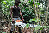 ANGOLA Calulo, old german coffee plantation, deforstation, worker with german made Stihl chain saw between coffee shrubs