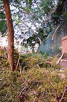 SAO PAULO, SP, 18.02.2014 - Bombeiros trabalham na retirada de uma árvore que ameaçava cair na Rua Turiassu, no bairro de Perdizes, zona oeste de São Paulo, na tarde desta terça-feira. (Foto: Bruno Ulivieri / Brazil Photo Press).