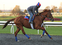 Animal Kingdom exercises on a beautiful fall morning at Keeneland Racecourse in preperation for the 2012 Breeders Cup at Santa Anita Park.  October 24, 2012.