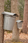 maple sap collection buckets