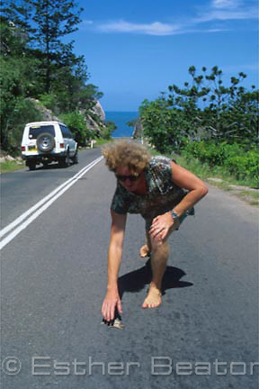Gavin Ryan, a painter, collects squashed cane toads from the road near his home to make into paintings. Magnetic Island, Qld